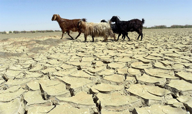 Drought grips large parts of Afghanistan