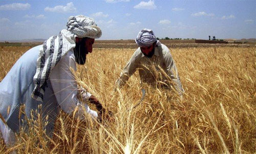 Optimism and Challenges of  Agriculture Industry in Afghanistan