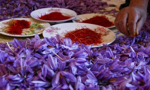 Clashes Over Picking Saffron Flowers Leave Two People Dead