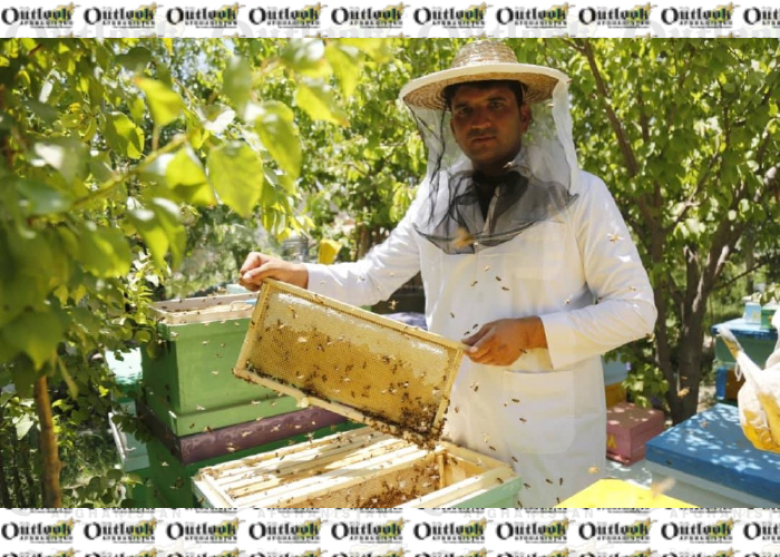 Last Year, about 2,500 Tons of Honey  Was Produced in The Country